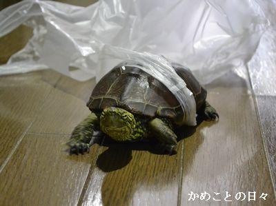 DSC_0337-suke.jpg