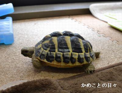 DSC_0343-suke.jpg