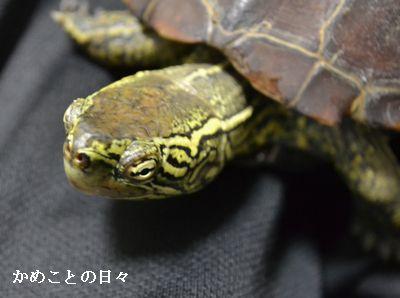 DSC_0361-suke.jpg