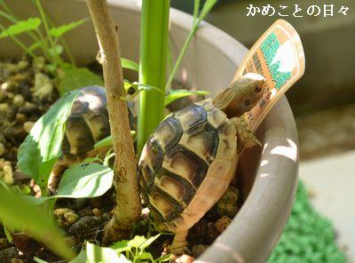 DSC_0362-hta.jpg