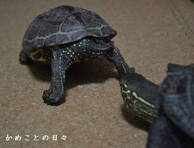 DSC_0428-sukeco.jpg
