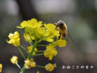 DSC_0442-bee.jpg