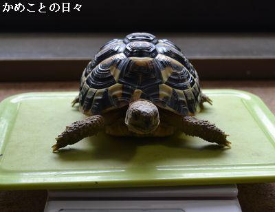 DSC_0444-fu.jpg