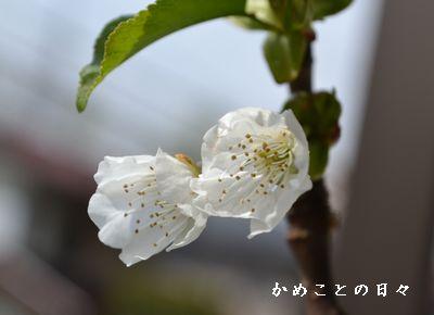 DSC_0446-ri.jpg