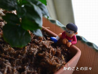 DSC_0449-nobi.jpg