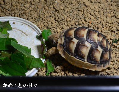 DSC_0455-ta.jpg