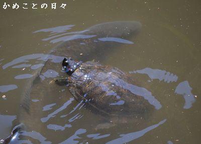 DSC_0460-kame.jpg