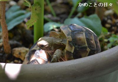 DSC_0468-ho.jpg