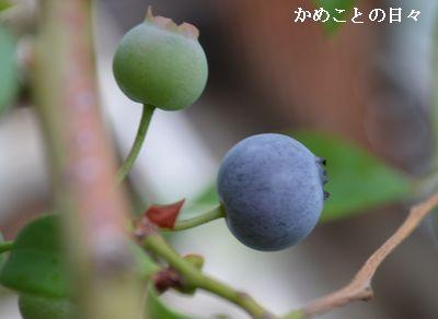 DSC_0500-blu.jpg