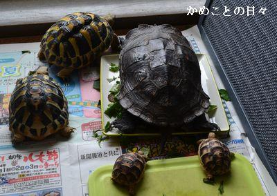 DSC_0503-kame.jpg