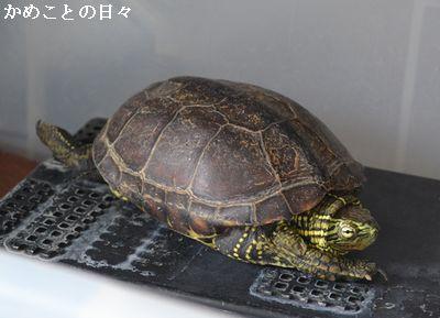 DSC_0510-suke.jpg