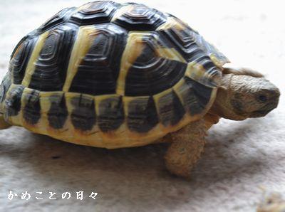 DSC_0524-fu.jpg
