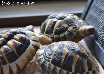 DSC_0533-riku.jpg