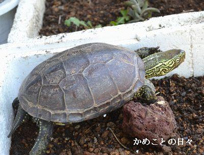 DSC_0540-suke_201406132310350e7.jpg