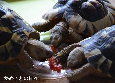 DSC_0543-riku.jpg