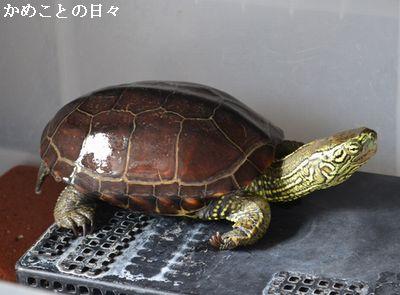 DSC_0558-suke.jpg