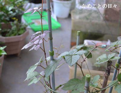 DSC_0565-yabu_2014061323114087b.jpg