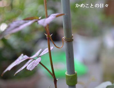 DSC_0567-yabu.jpg