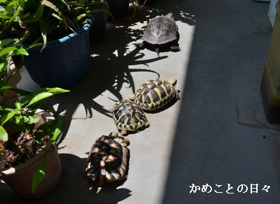 DSC_0579-kame.jpg