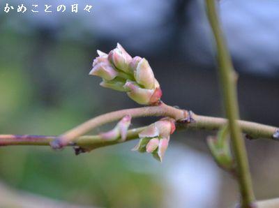 DSC_0644-blu.jpg