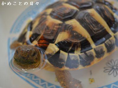 DSC_0671-fu.jpg
