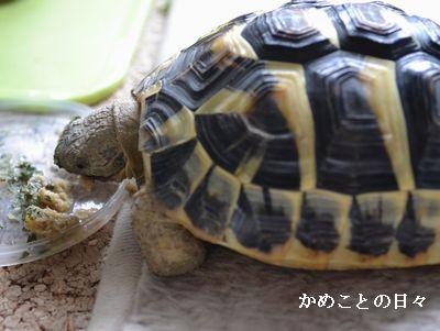 DSC_0684-fu.jpg