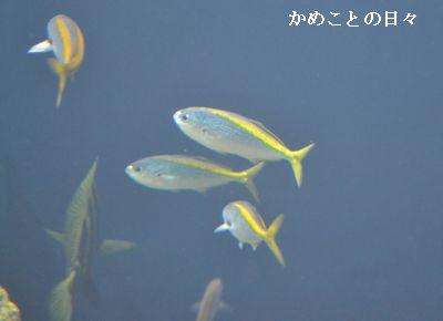 DSC_0688-taka.jpg