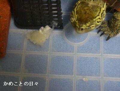 DSC_0698-suke.jpg