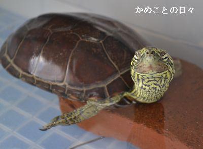 DSC_0701-suke.jpg