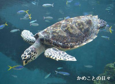 DSC_0701-tai.jpg