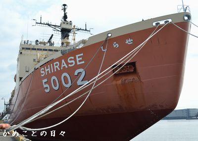 DSC_0707-shira.jpg