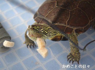 DSC_0708-suke.jpg