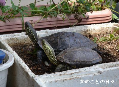 DSC_0708-sukeco.jpg