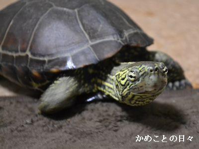 DSC_0709-suke.jpg