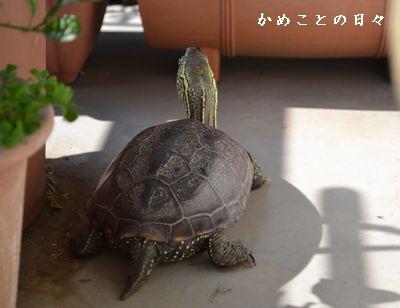 DSC_0746-suke.jpg