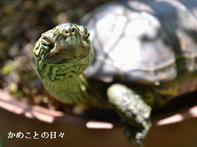 DSC_0748-suke.jpg