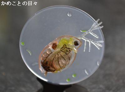 DSC_0825-miji.jpg