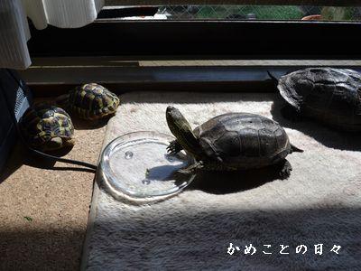 DSC_0834-suke.jpg