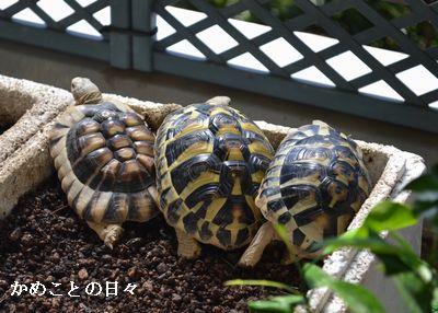 DSC_0843-riku.jpg