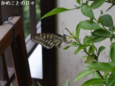 DSC_0846-bata.jpg