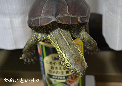 DSC_0846-suke.jpg
