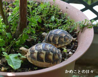 DSC_0848-hota.jpg