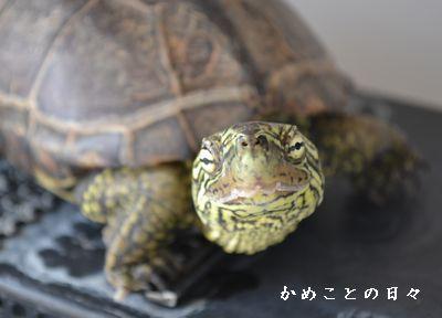 DSC_0901-suke.jpg