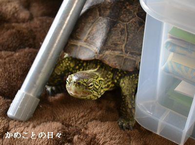 DSC_0913-suke.jpg