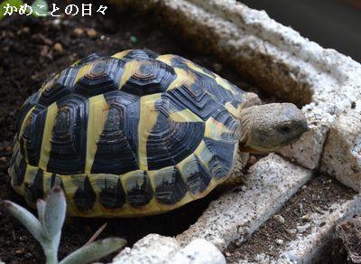 DSC_0914-fu.jpg