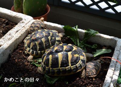 DSC_0923-kufu.jpg