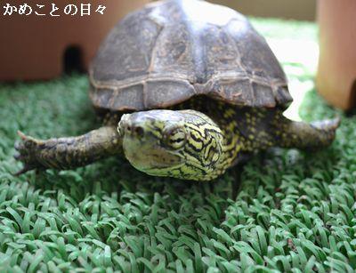 DSC_0929-suke.jpg