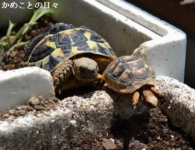 DSC_0936-futa.jpg