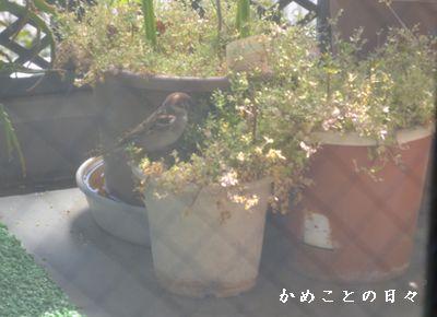 DSC_0943-su.jpg