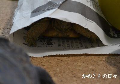 DSC_0948-fu.jpg